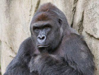 Cincinnati Zoo Makes Tough, Appropriate Decision