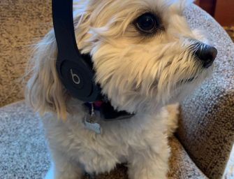 The Pawfect Playlist for You and Your Pet